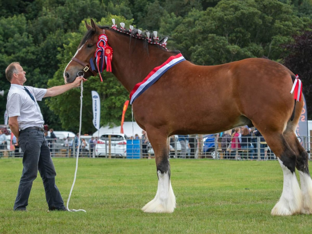 Champion of Champions at Border the Union Show