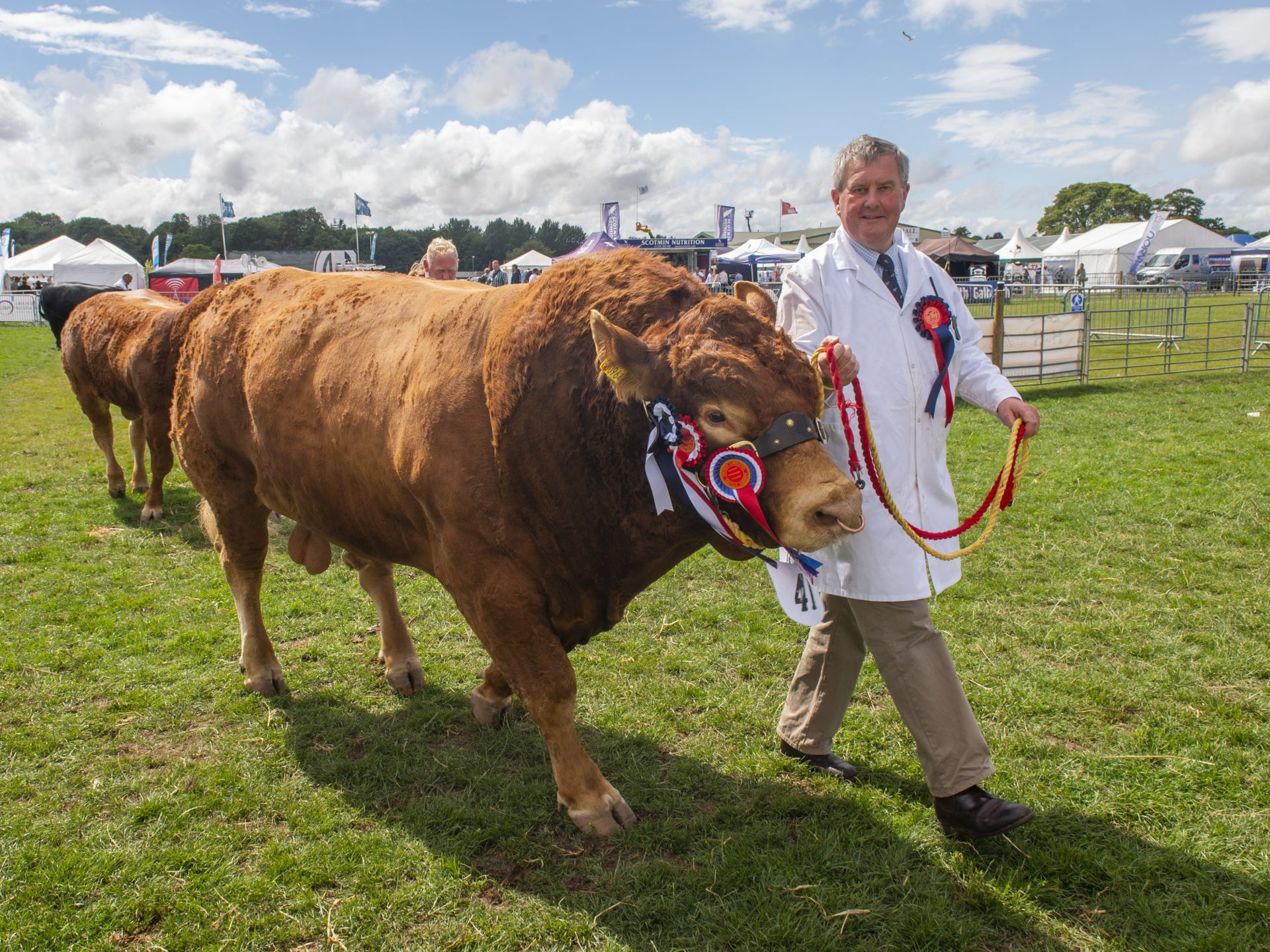 Cattle parade at the Border Union Show in Kelso
