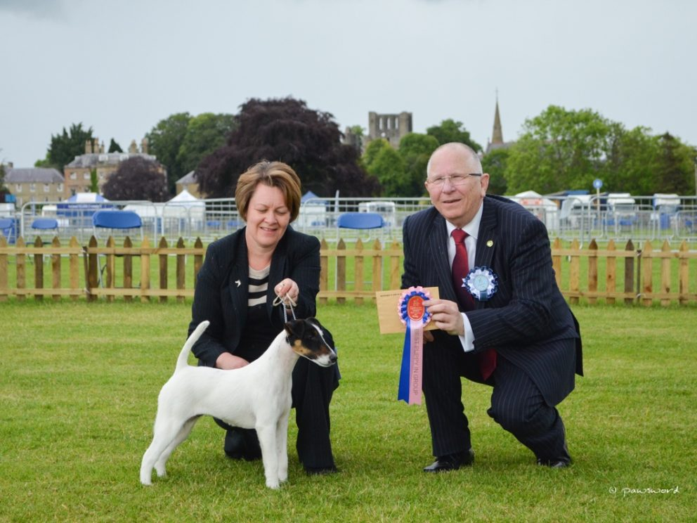 Border Union Dog Show