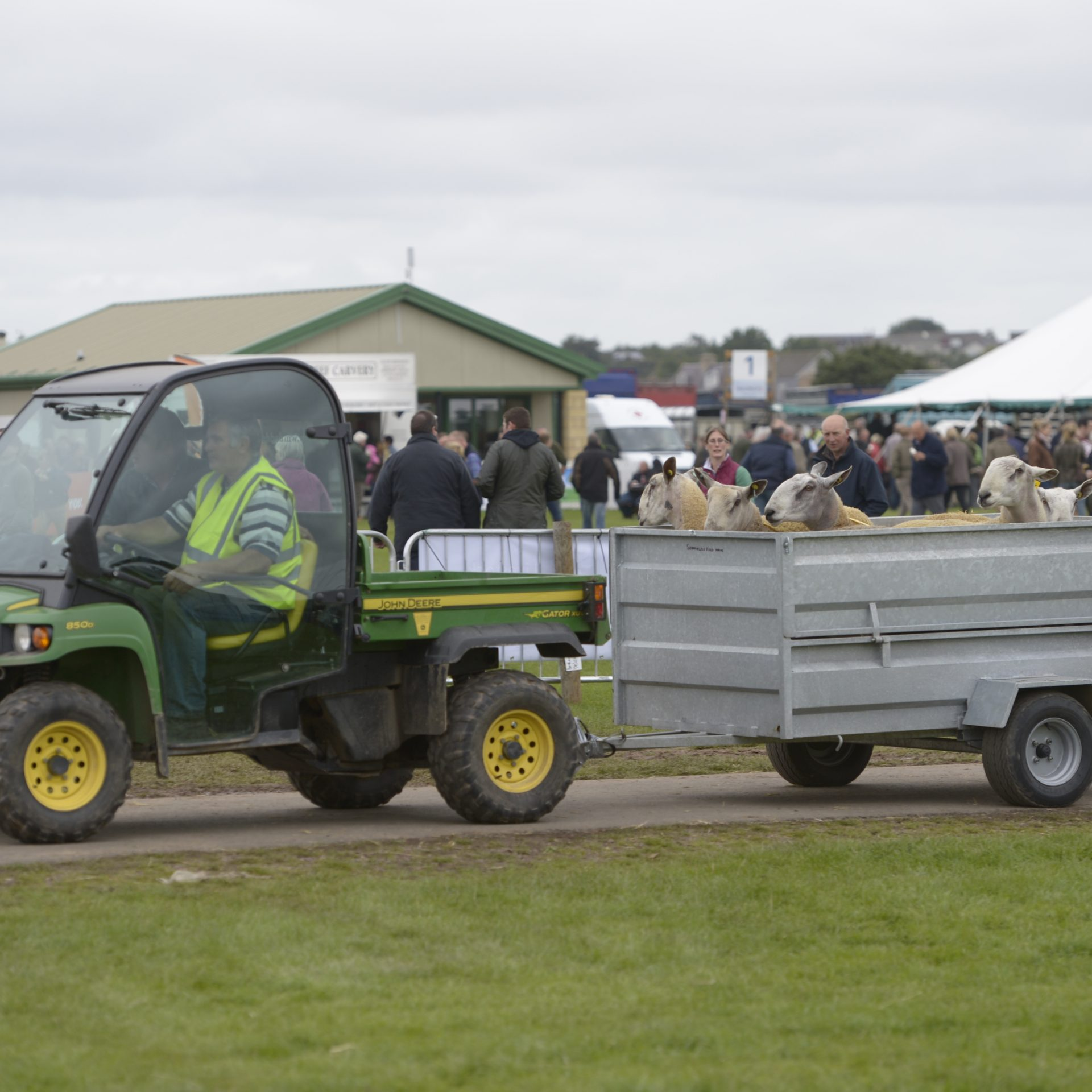 Tup Taxis at Kelso Ram Sales